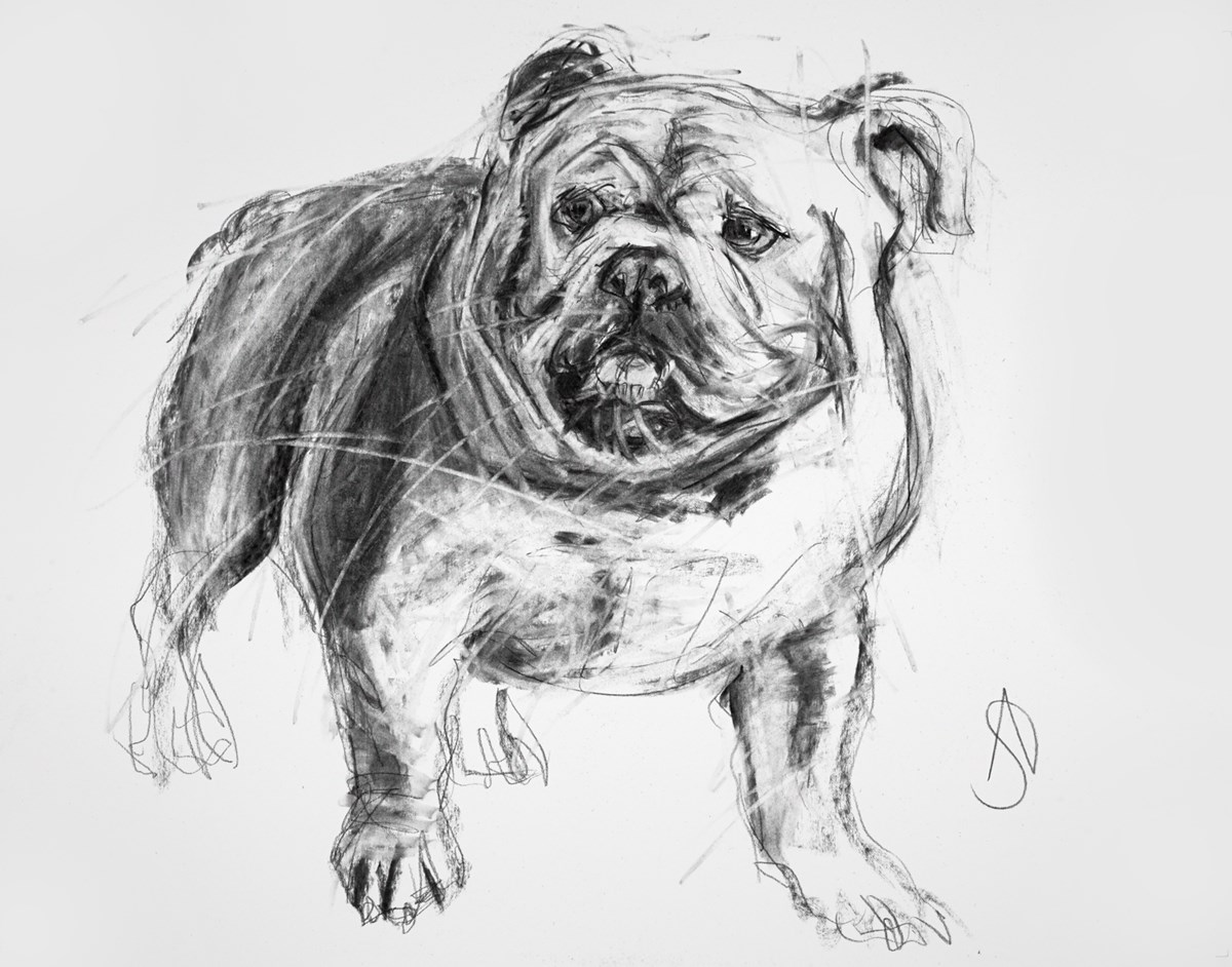 English Bulldog I by april shepherd -  sized 24x18 inches. Available from Whitewall Galleries